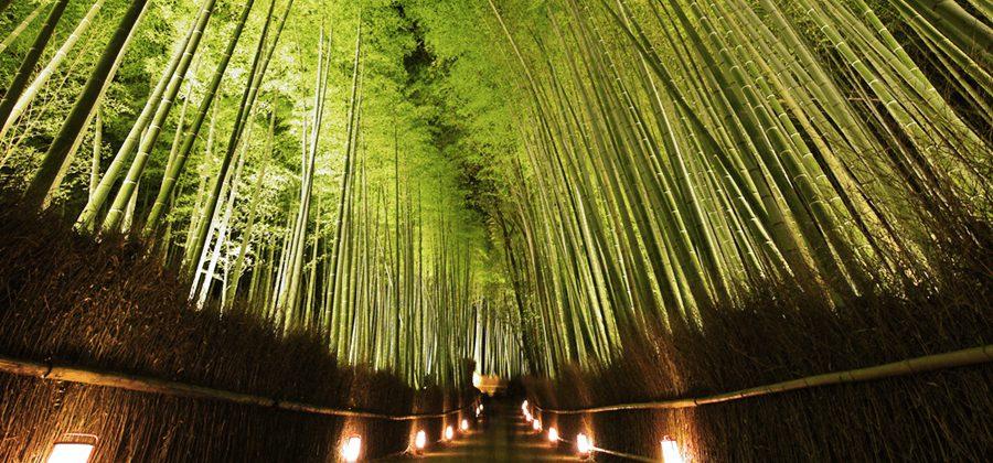 ライトアップされた嵐山の竹林