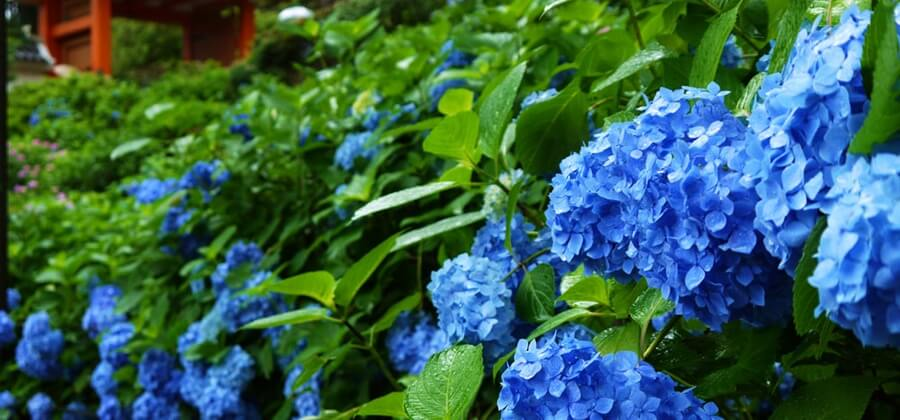京都で着物をレンタルするなら雨の季節もオススメ!