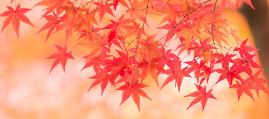 秋におススメの着物の柄3選