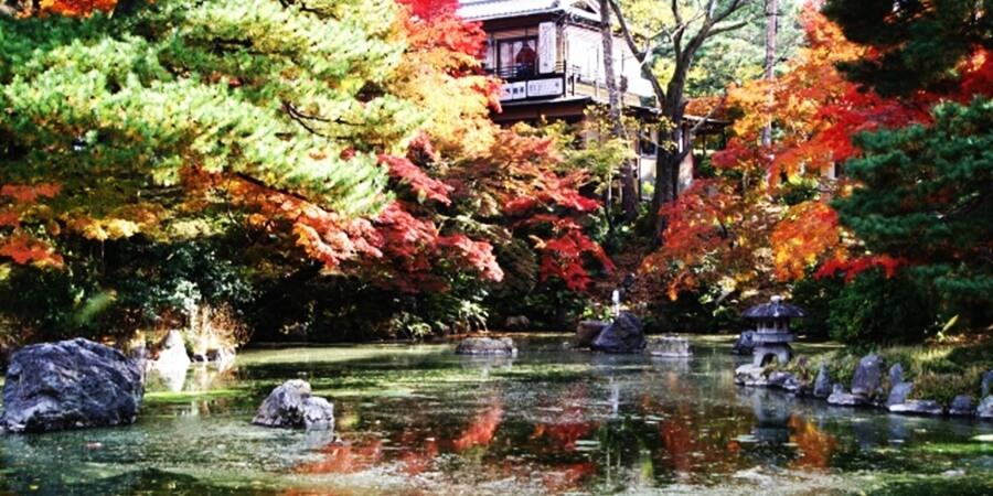 京都秋のライトアップ平等院