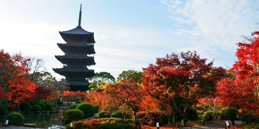 紅葉シーズンに楽しめる京旅行|おススメスポット第2弾