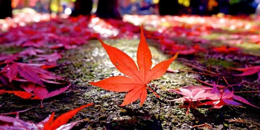 京旅行|紅葉ライトアップには着物レンタルで優雅なひと時を