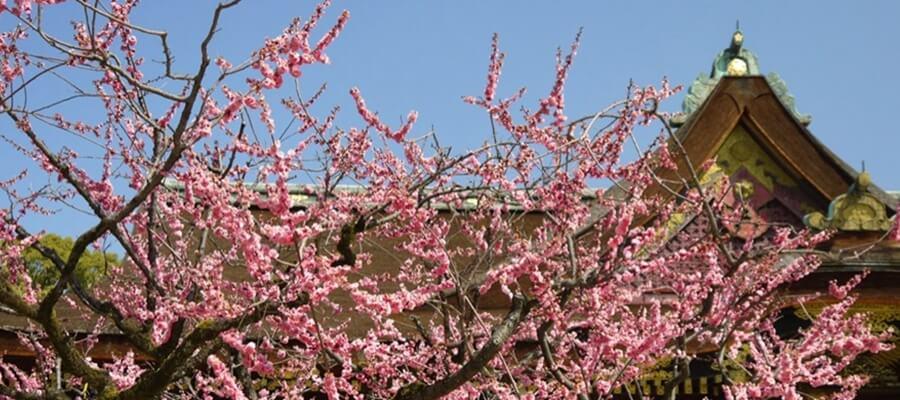 京都の梅はどこで見る?梅見スポットBEST3