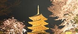 京都の桜は着物で楽しむ!!着物レンタルで春の訪れを